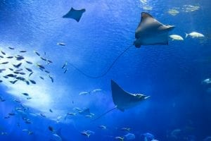 Environmental Mystery: 25 Interesting Facts About the Environment 13
