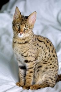 The 20 Most Expensive Pets You Can Own! 14