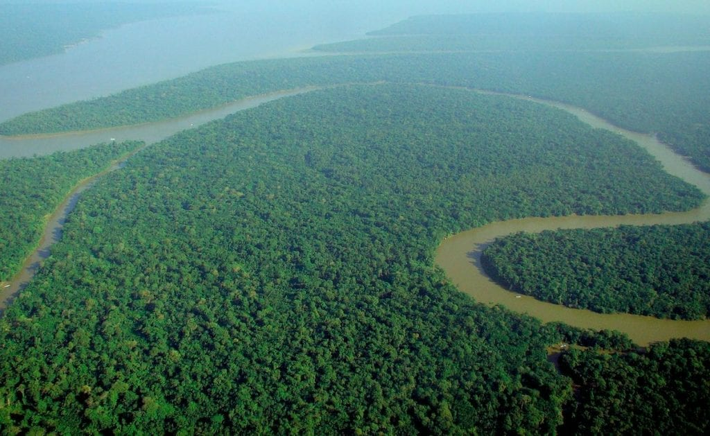 most dangerous forest in the world