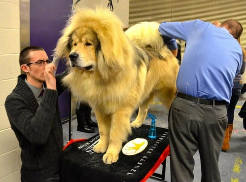 most expensive pets to take care of