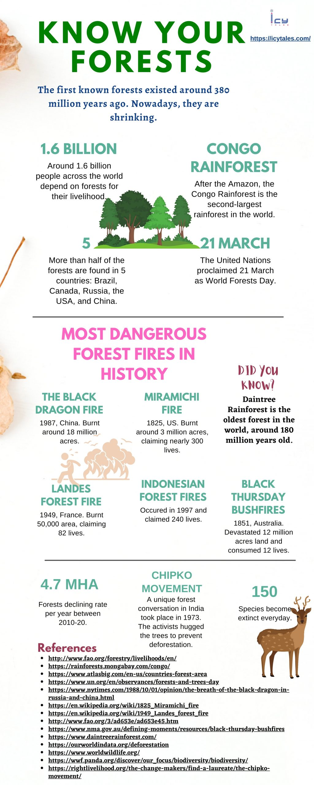 Interesting Facts About Forests You Should Know