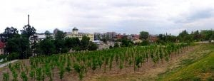 Zielona Gora Wine Fest is polish festival celebrating grapes harvest