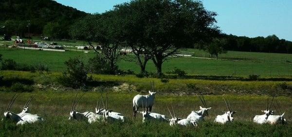 Texas park and wildlife