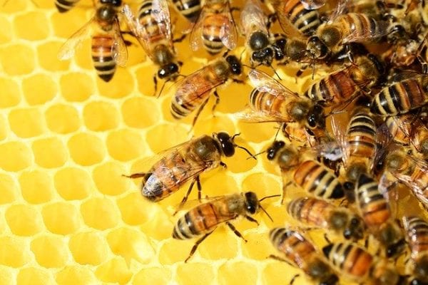 how is honey made