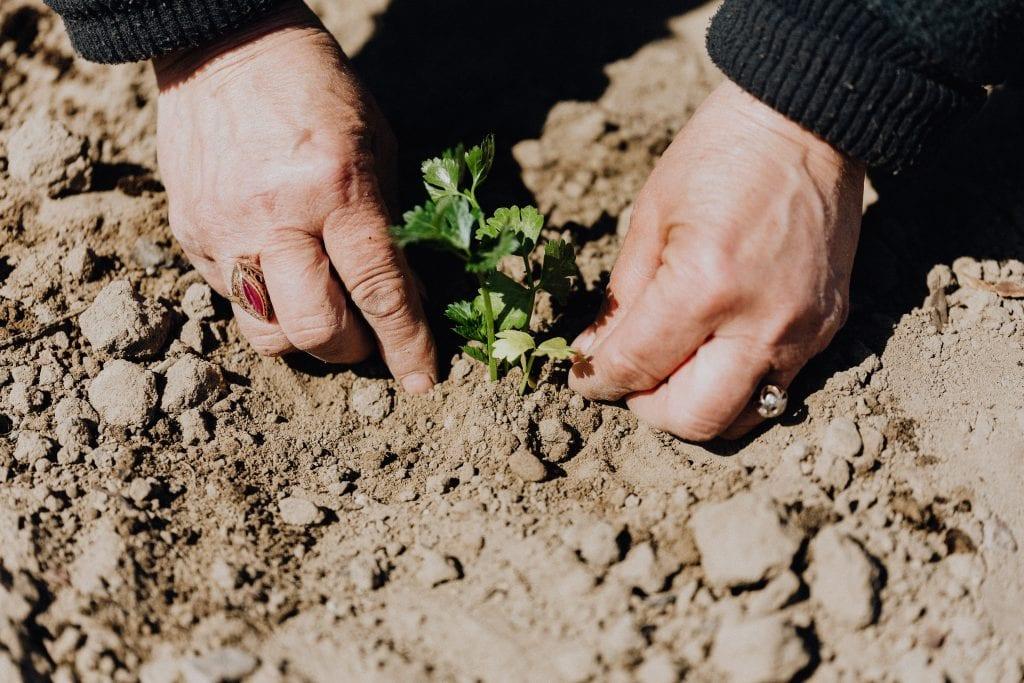 Plantation Programs