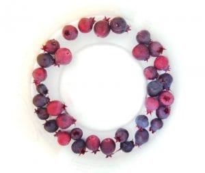 saskatun berry