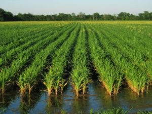 Top 3 Successful Farming Stories In The World 1