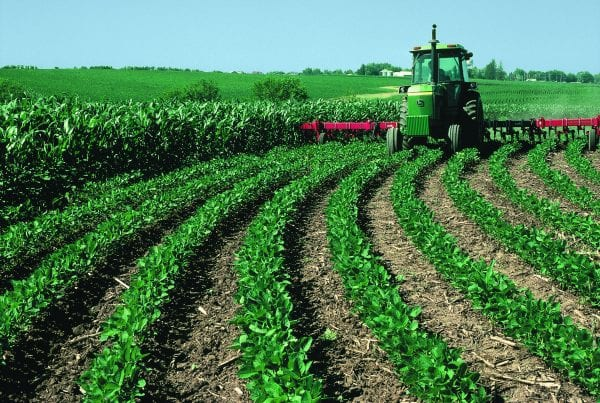 Top 3 Successful Farming Stories In The World 15