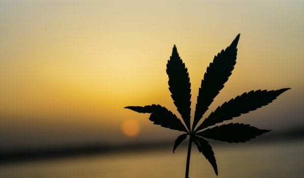 5 Benefits Of Mail Order Marijuana 1