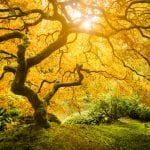 Tree Of Life Meaning In 7 Beautiful Cultures 15
