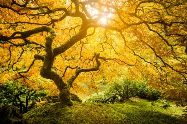 Tree Of Life Meaning In 7 Beautiful Cultures 9