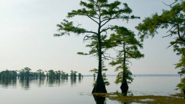 Top 10 East Texas Lakes 12