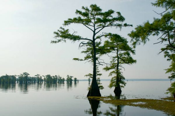 Top 10 East Texas Lakes 4