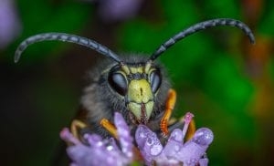 Brilliant Optical Devices of Nature: Jewels in eyes of Insects 8