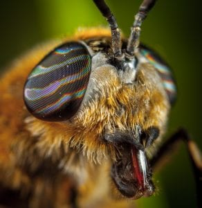 Brilliant Optical Devices of Nature: Jewels in eyes of Insects 6