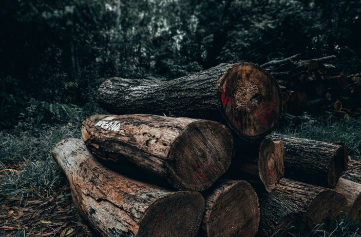 10 of the best deforestation solutions