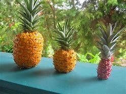 pineapple symbolism