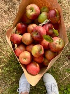 apple picking nc