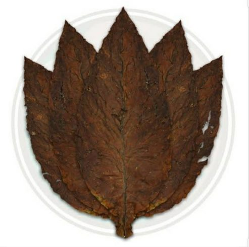 Grabba Leaf And All Astonishing Things About It 1