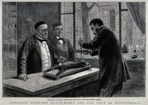 Louis Pasteur's Research of Hydrophobia: The Discovery of Rabies 5