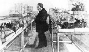 Louis Pasteur's Research of Hydrophobia: The Discovery of Rabies 7