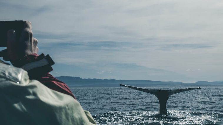Whale-watching in Cape Cod