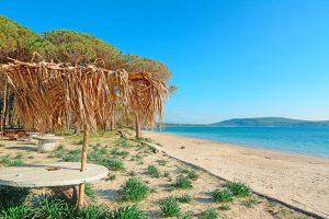 Pines in sardinia beaches