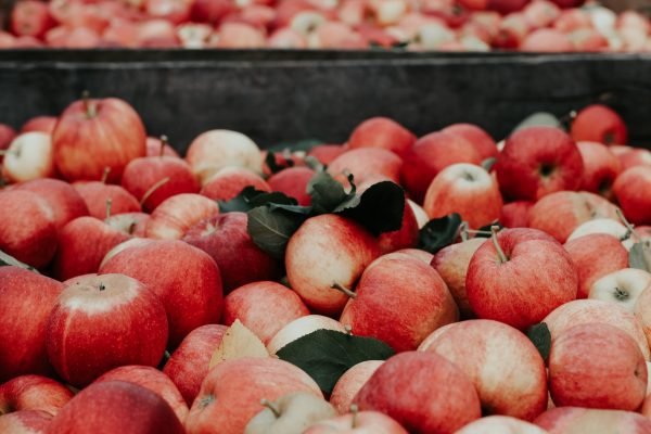 Apple Picking NC : 10 Best Orchards 7