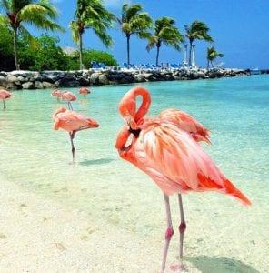 Flamingo Island Aruba: A Delightful Tourist Destination 3