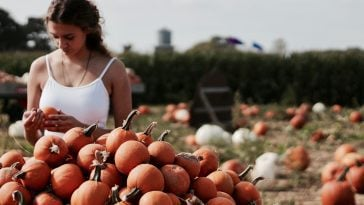 9 Best Pumpkin Patch Nashville Sites 10