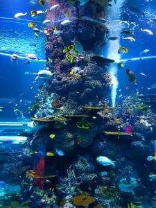 Aquarium explaining the depth of oceans