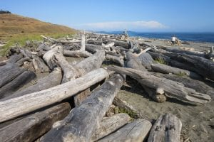 San Juan Islands: 9 Amazing Things To Know 11