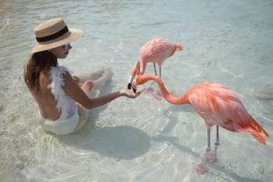 Flamingo Island Aruba: A Delightful Tourist Destination 9