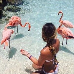 Flamingo Island Aruba: A Delightful Tourist Destination 10