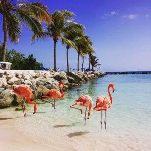 Flamingo Island Aruba: A Delightful Tourist Destination 7