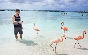 Flamingo Island Aruba: A Delightful Tourist Destination 8