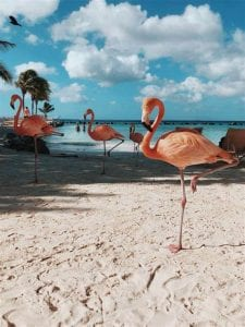 Flamingo Island Aruba: A Delightful Tourist Destination 6