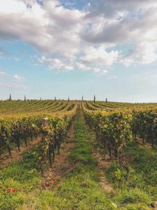 Wineries in Alabama
