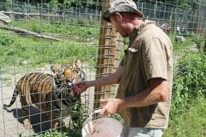 Bud feeding the tigers at Big Cat Feeding. - Picture of DeYoung Family ...