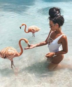 Flamingo Island Aruba: A Delightful Tourist Destination 11