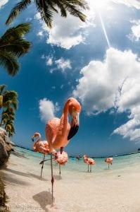 Flamingo Island Aruba: A Delightful Tourist Destination 4