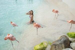 Flamingo Island Aruba: A Delightful Tourist Destination 5