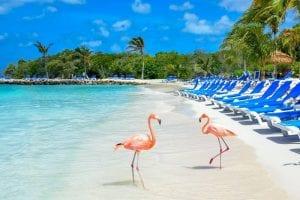 Flamingo Island Aruba: A Delightful Tourist Destination 2