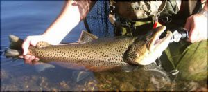 Experience Spring Trout Fishing in Lake Taneycomo - ThousandHills.com