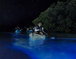Bioluminescent Kayaking in Mosquito Lagoon