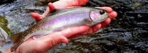 Red River Trout Fishing - Best Charter Price Guaranteed