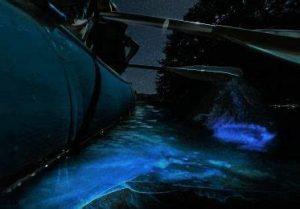 Bioluminescent Kayaking Tours in Florida