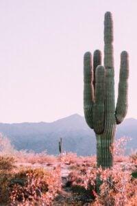 Cactus: Plant with Amazing Benefits 5
