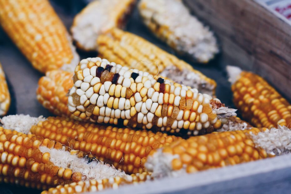 Corn on the Cob: Cool Facts to Know 3