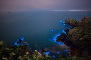 Beautiful bioluminescence plankton on a beach